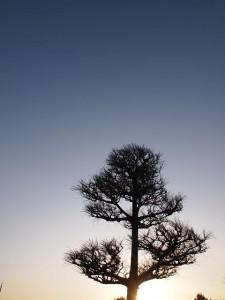再びこの木